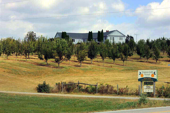 Virginia Gold Orchard and Estate