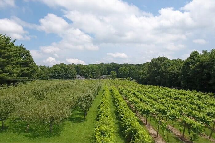 Windgate Vineyards and Winery
